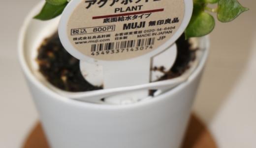 良品のある生活vol.3「観葉植物 アクアポット2号(ミリオンハート)」レビュー