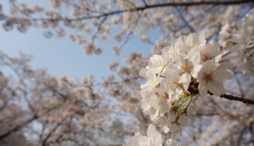 JR浜松町駅から徒歩3分!都会なのに風光明媚な旧芝離宮恩賜庭園へ行く