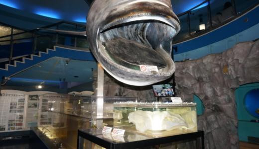 ペット同伴OK!落ち着いた雰囲気の水族館「京急油壺マリンパーク」へ