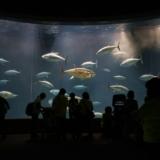 日本で唯一の迫力あるマグロ回遊水槽がある「葛西臨海水族園」に行く