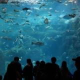 新江ノ島水族館の相模大水槽