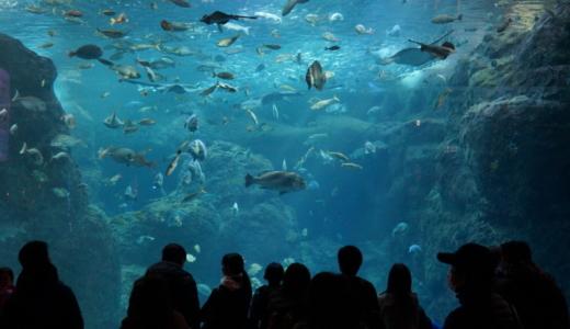 国内トップレベルのクラゲ展示!都心からもアクセス良好な新江ノ島水族館へ