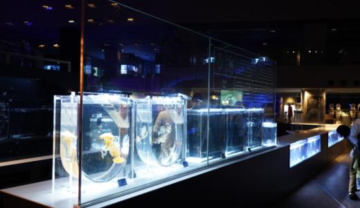 クラゲ展示がこれまでよりも拡大して充実!大規模改装リニューアル直前のすみだ水族館へ