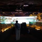 世界の水辺の生き物大集合!カワスイ川崎水族館はルフロン10階にある都市型水族館