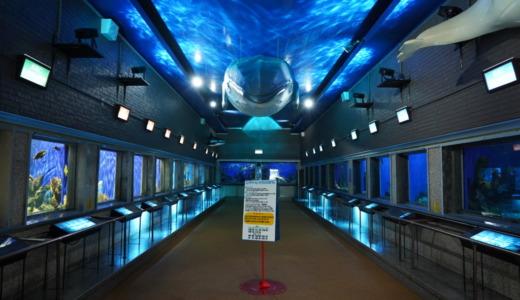 北海道最古の水族館!こじんまりとした古き良き空間が広がる市立室蘭水族館へ