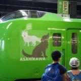 お得なフリーきっぷで旭川まで特急利用!札幌から富良野・美瑛観光へ向かう