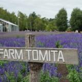 夏季の富良野観光の目玉!ファーム富田は入場無料のラベンダー農園