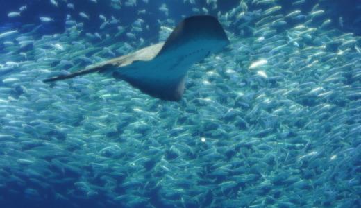サメやマンボウなど大型魚展示が充実!茨城県の海岸部にあるアクアワールド大洗水族館へ